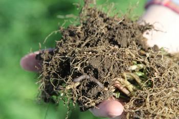 Health Soil
