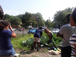 Tapley Court Community Garden
