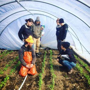 farmers in Greenhouse